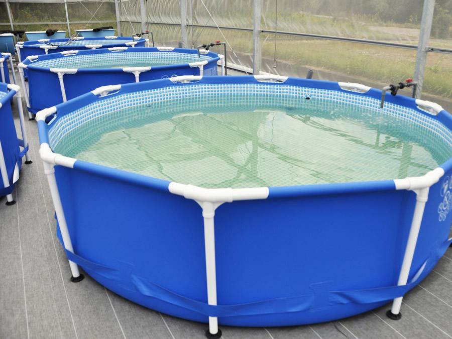養殖用水槽04